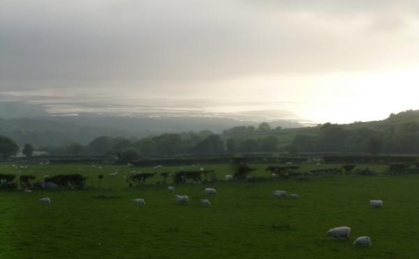 moutons collines et mer